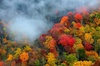 Tennessee Mountain Tours - Knoxville: Smoky Mountain Trees of Many Colors Tour