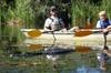3 Hour Guided Mangrove Tunnel Kayak Eco Tour