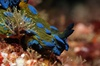 Full-Day Scuba Diving Charter to Goat Island Marine Reserve from Wa...