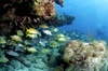 Surf You To The Moon, LLC - Miami: Florida Keys Snorkeling Tour