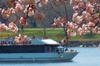 Afternoon Cherry Blossom boat tour