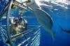Hawaii Shark Encounters Inc - Pier 16: Shark Cage Diving In Oahu