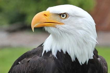 Sitka Scenic Tour- Premium - Alaska Raptor Center, Fortress of the Bears, Totems! 55ccf135-32c2-4dff-9107-5273b919ae4a