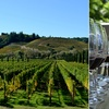 """""""Redwoods & Wine Country Escape"""" Tour - Wednesday, May 16, 2018 / 7..."""
