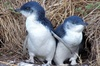 Half Day Phillip Island and Penguins Tour from Phillip Island