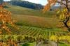 Circuit privé dans les vignobles de Monbazillac avec EXPLOREO
