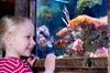 SEA LIFE Aquarium Minnesota - Minneapolis / St Paul: SEA LIFE Minnesota Aquarium at the Mall of America