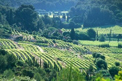 Découvrez les vins AOP de Cassis et Bandol et les incroyables paysages de cette petite région de Provence bordant la mer Méditerranée. Avec votre guide, goûtez les élégants rosés blancs et délicats de Cassis, largement appréciés par les connaisseurs, ains