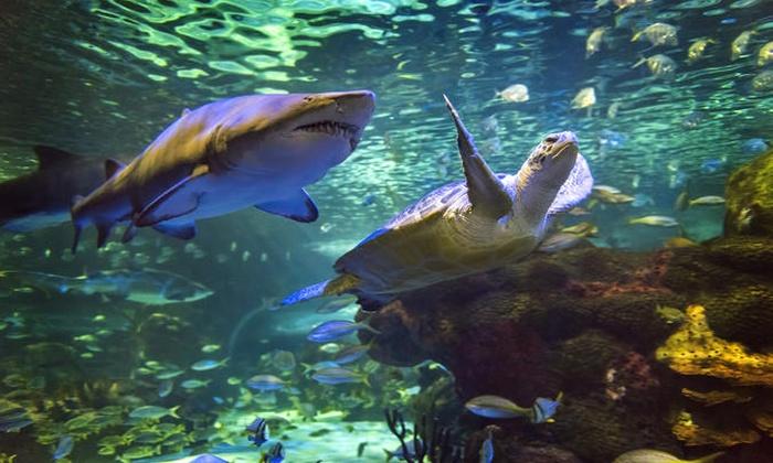 Toronto aquarium coupons 2019