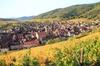Route des vins d'Alsace: visite-dégustation au départ de Strasbourg