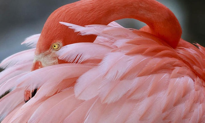 Flamingo gardens flamingo gardens groupon - Flamingo gardens fort lauderdale ...