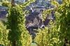 Visite privée d'une journée complète: Le meilleur de l'Alsace au d...