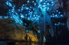 PRIVATE TOUR: From Tauranga: Waitomo Glow-Worm Caves' Natures Wonde...
