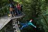 Zipline Adventure through Native Forest - The Original Canopy Tour