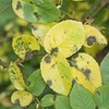 Common Plant Diseases in the Landscape