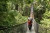 Mesmerizing Nature Walk in Lynn Canyon Park