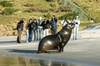 Peninsula Encounters - Standard tour - Penguins, Seals, Sea-lions a...