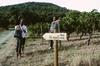 Randonnée au pic Saint-Loup avec dégustation de vin au départ de Mo...