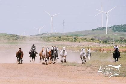 A CAMPO ABIERTO: Visita a los caballos de Álvaro Domecq y los toros bravos en libertad