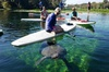 Paddling in Florida with Manatees