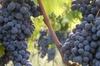 Tour in Toscana per vegetariani - Chianti e cibo biologico da Firenze