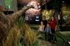 Small Group 2-Hour Eco Wildlife Tour at Zealandia