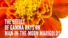 "Orono Middle School Auditorium - Plymouth - Wayzata: ""The Effect of Gamma Rays on Man-in-the-Moon Marigolds"" - Sunday February 26, 2017 / 1:30pm"