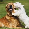 $30 For 2 Days Of Doggie Day Care (Reg. $60)