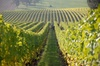 Fredericksburg Hill Country Wine Tour with Tastings