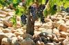 Excursion œnologique privée d'une journée complète «Côtes du Rhône...