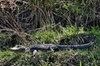6 Passenger Private Bay Boat Swamp Tour