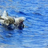 Dolphins or Turtles Guaranteed, Catamaran Morning or Afternoon Snor...