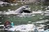 Kangaroo Island Ocean Safari - Snorkeling Safari