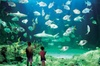 Sydney Pass: SEA LIFE Aquarium, Sydney Tower Eye, WILD LIFE Sydney,...