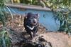 Private Mt Wellington, Richmond, Bonorong Wildlife Sanctuary Tour f...