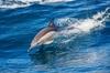 Excursión para ver delfines y la Playa de GüiGüi
