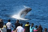Tangalooma Island Resort Whale Watching Day Cruise with Dolphin Fee...