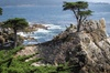 The Best Adventure Tour to Monterey,Carmel and 17 miles Drive.