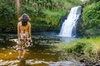 Hilo Tropical Waterfalls Tour