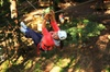 Tree Ropes and Zipline Experience in The Dandenong Ranges