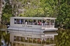 Swamp and Bayou Sightseeing Boat Tour with Transportation from New ...
