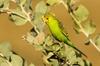 Pilbara Bird Tours