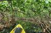 Kayak Tour of Mangrove Maze from Key West