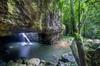 Springbrook andTamborine Rainforest Tour Incl Natural Bridge and Gl...
