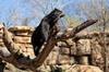 Nashville Zoo Admission Pass