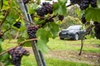 Private Hampshire Vineyards Tour - up to six people