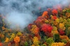 Smoky Mountain Trees of Many Colors Tour