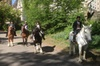 Central Park Sightseeing - New York City: Horseback Riding in Central Park