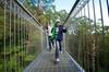 Skip the Line: Illawarra Fly Treetop Adventures Treetop Walk Admiss...