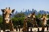 Sydney Taronga Zoo General Entry Ticket